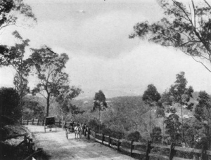 Picturesque ascent to Mt. Coot-tha by horse drawn passenger vehicles, ca. 1914 Courtesy of SLQ