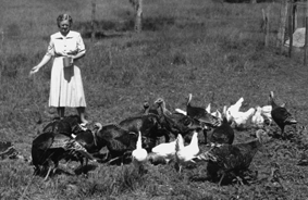 StateLibQld_2_203932_Feeding_the_chooks,_1952